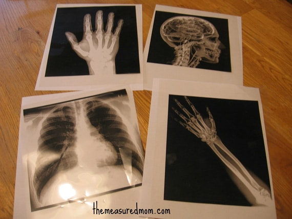 x ray sensory bin 1 the measured mom Easy Sensory Activity for Kids: Make an X Ray Light Box!