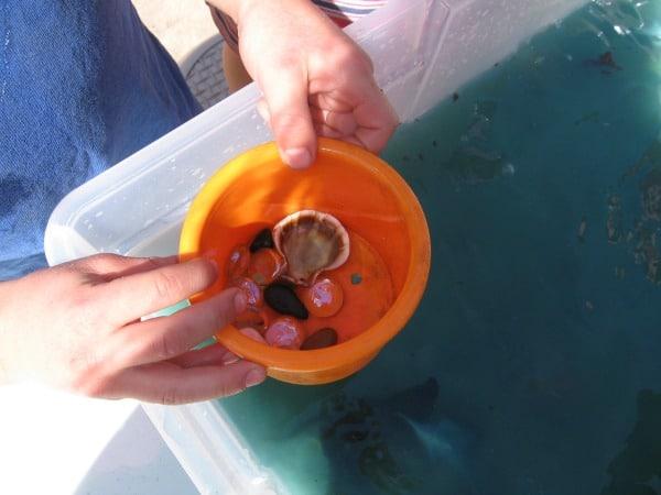 ocean sensory play6